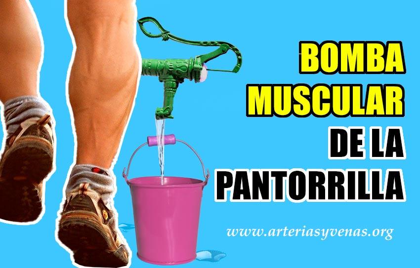 bombas musculares venosas