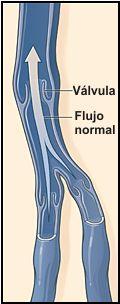 valvula venosa, flujo normal