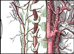 Segmento V2 de la arteria vertebral